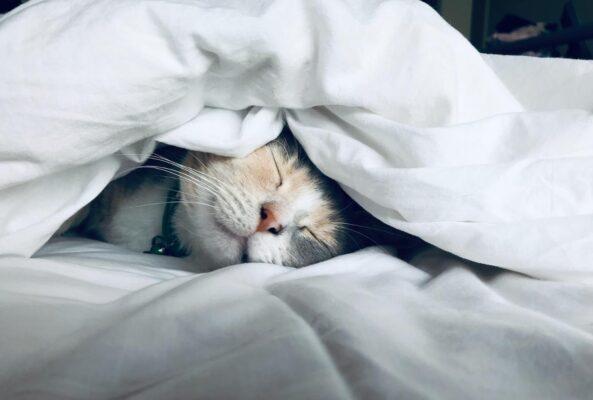 Better sleep